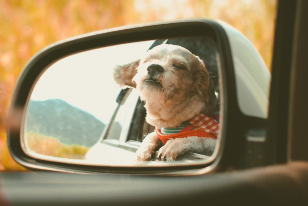Pet Transport Ireland